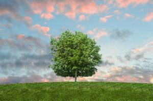 Top tips to create a sustainable working environment